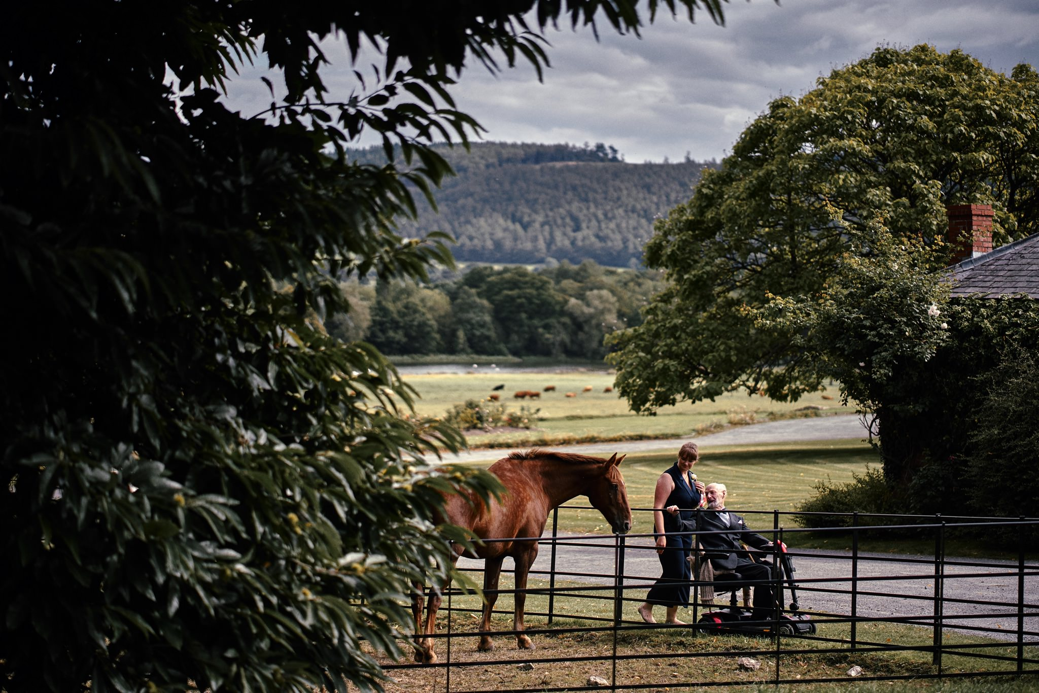 Wedding guests whisper to horses at Walcot Hall Hotel, Shropshire.